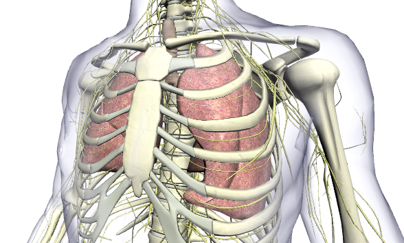 BioDigital Human Platform 2.0: Explore the Human Body in 3D!