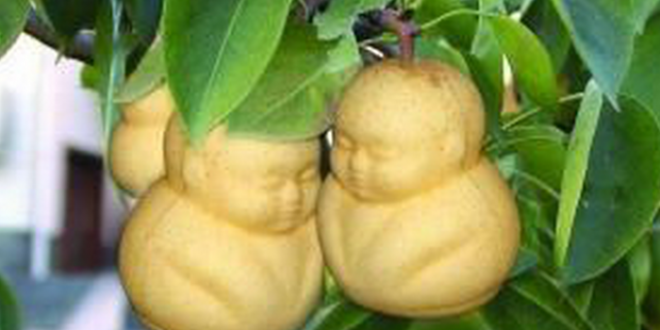 you-can-find-these-buddha-shaped-pears-for-only-12-for-a-set